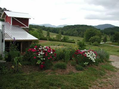 loganberry_farms2